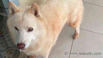 Tutora busca por cachorro que desapareceu na vicinal que liga Assis a Platina - Assiscity