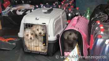 NRW: Hundewelpen ohne Licht und Wasser in Transporter auf A45 bei Freudenberg gezwängt - Soester Anzeiger