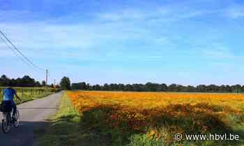 De kleurrijkste straat van Limburg ligt in Kinrooi - Het Belang van Limburg