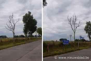 """Twee dode bomen worden gekapt: """"Vormen gevaar voor het verkeer"""" - Het Nieuwsblad"""