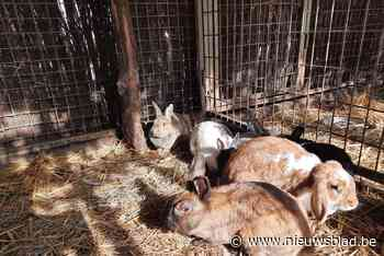 Verwaarloosde kippen en konijnen in beslag genomen