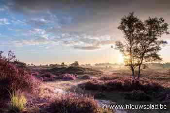 Kalthoutse Heide zet eerste stap om Nationaal Park te worden: kandidatuur op het laatste nippertje ingediend