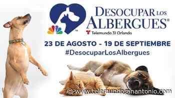 """Súmate a """"Desocupar Los Albergues"""" y adopta tu mascota - Telemundo San Antonio"""