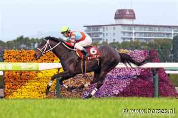 Qatar Prix Foy, Prix Vermeille en Prix Niel - Horses.nl