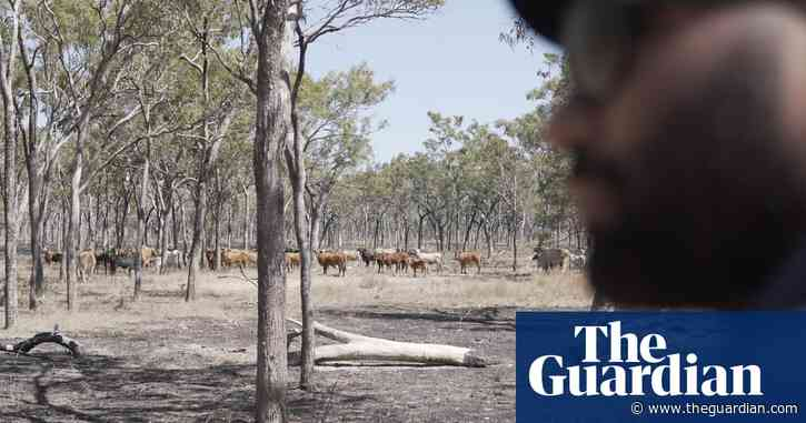 Indigenous rangers to use SpaceCows program to protect sacred sites and rock art from feral herds