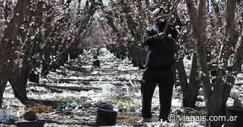 La helada golpeó fuerte en General Alvear y zonas de San Rafael - Vía País
