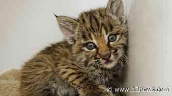 State 48's furry residents: Keeping wild animals safe - 12news.com KPNX