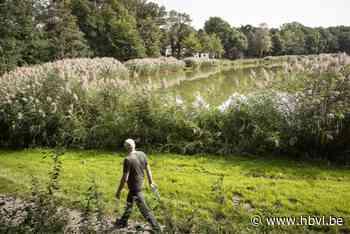Plan voor tien luxe vakantiehuisjes aan water IJzeren Man in Weert - Het Belang van Limburg