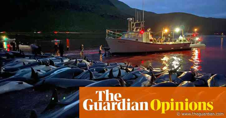 Horror at the Faroes dolphin slaughter is only human – but it risks hypocrisy | Philip Hoare