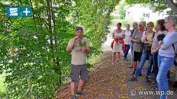 Medizin und Gewürz: In Netphen zu den Kräutern wandern - Westfalenpost