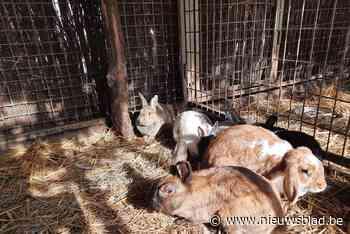 Verwaarloosde kippen en konijnen in beslag genomen (Balen) - Het Nieuwsblad
