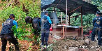 Operación Dominio II: hallan narcolaboratorio en la Montaña de Las Flores, Colón - La Tribuna.hn