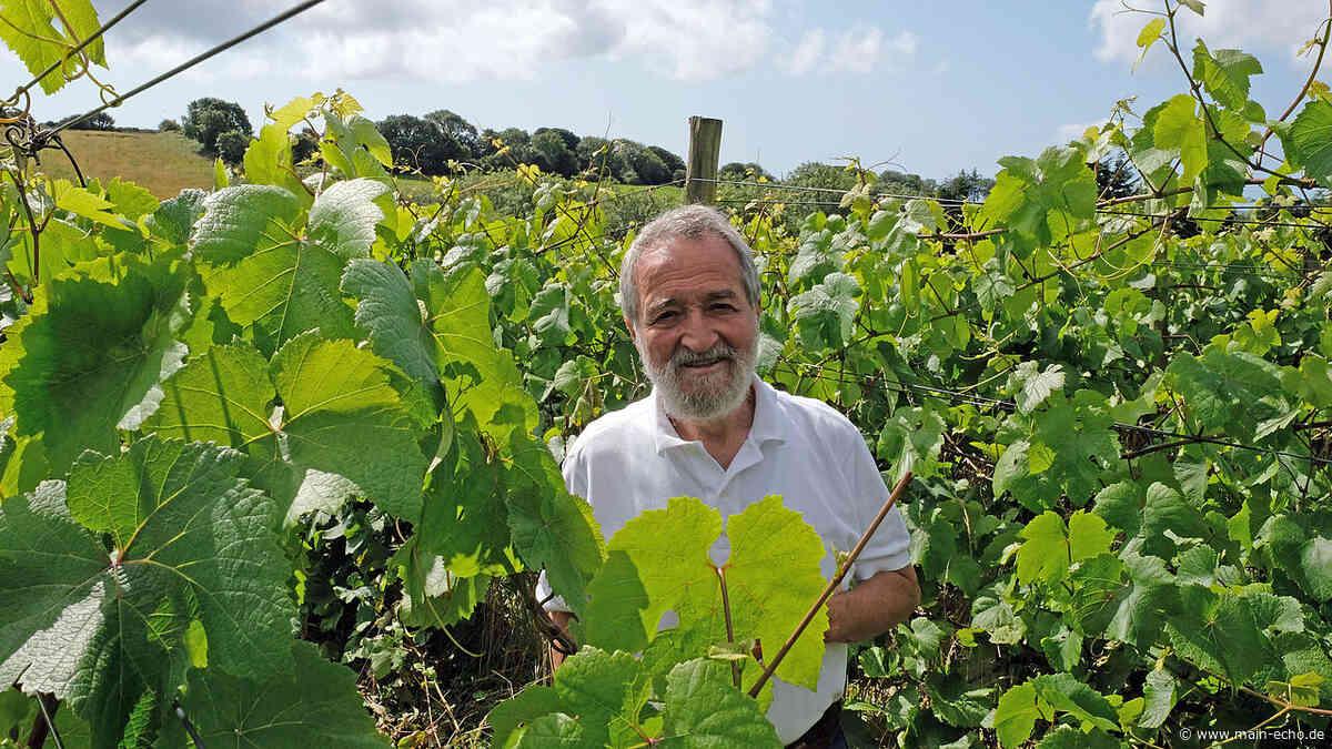 Unterfranke baut irischen Wein an und vertreibt ihn in Aschaffenburg - Main-Echo