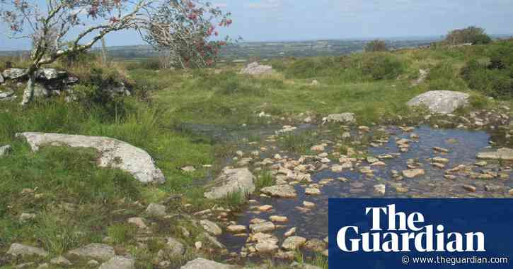 Country diary: vignettes of life across the moor
