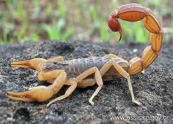 Calor intenso favorece a presença de escorpiões em ambientes domésticos - Prefeitura de Assis
