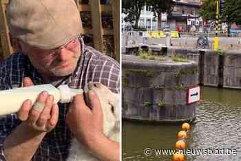 Na overlijden kajakker Jules (59): nieuwe verbodsborden op p... (Gent) - Het Nieuwsblad