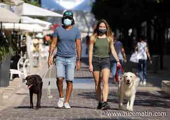 """Qui sont ces """"dog walkers"""" qui promènent vos chiens à Monaco?"""