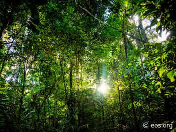 Forest Recovery in the Amazon Is a Slow Process - Eos