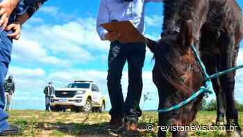 Santa Maria realiza microchipagem de equinos nesta quinta-feira - Revista News