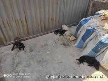 Homem é preso na Vila Marília Costa em Santa Maria de Itabira suspeito de maus tratos a animais - Plantão Santamariense