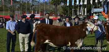 Vaquillona de La Elisa, de Romay Elorza, se convirtió en la Campeona Suprema de la raza - Diario EL PAIS Uruguay