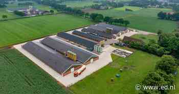Veel minder boerenbedrijven in Deurne; stijging van aantal kuikens en biggen - Eindhovens Dagblad