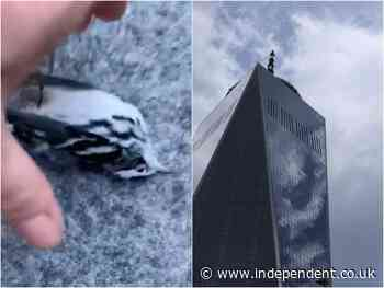 Hundreds of birds die after slamming into the World Trade Center