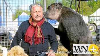 Vor dem Gastspiel in Wolfsburg gibt's Kritik an Zirkus Belly - Wolfsburger Nachrichten