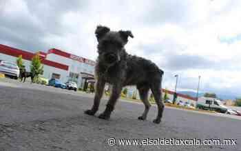 """""""Coco"""" aún espera a su dueña fallecida, en el Hospital de Huamantla - El Sol de Tlaxcala"""