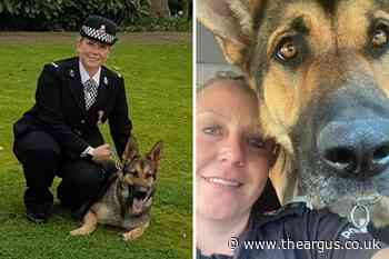 Sussex police dog celebrated at Blue Paw Awards