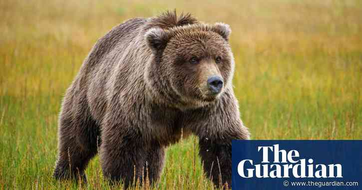 Humans are encroaching on grizzly territory. Can we live together?