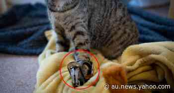 'Unethical': Call to ban device after animals found in 'agony' - Yahoo News Australia