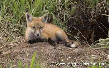 Natural Connections: How to photograph cute baby animals - Superior Telegram