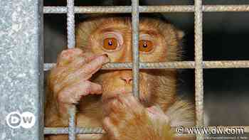 EU lawmakers seek end to science experiments on animals - DW (English)
