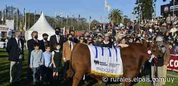 Sociedad Ganadera San Salvador logró su primer Gran Campeón Angus - Diario EL PAIS Uruguay
