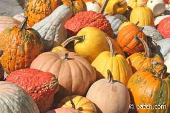 Popular Pumpkin Patch Farms Near Newton - Patch.com