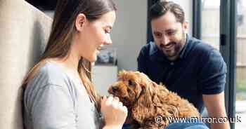 New pet owners taking more than three months to get used to new puppy or kitten