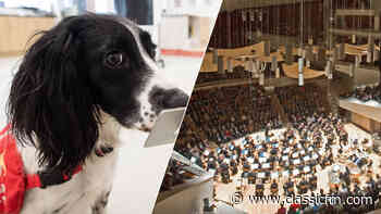 In Germany, super-sniffer dogs are detecting whether concertgoers have coronavirus - Classic FM