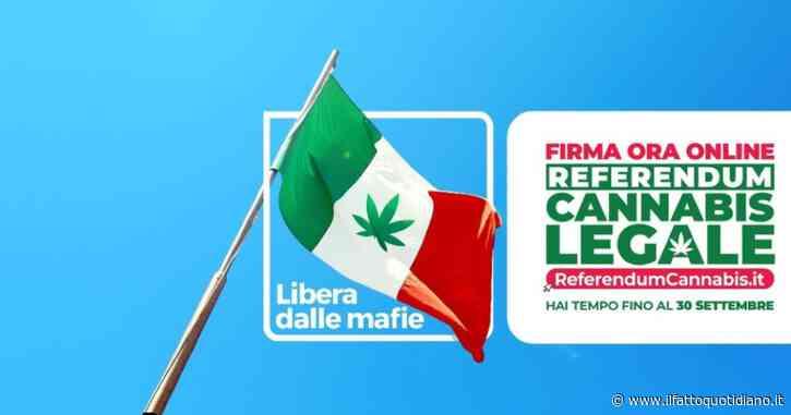 Referendum Cannabis legale, il punto stampa sulla raccolta firme con Magi (+Europa) e Cappato (Associazione Coscioni): la diretta tv