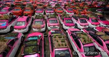 La pandemia de coronavirus convierte taxis en macetas - Clarín