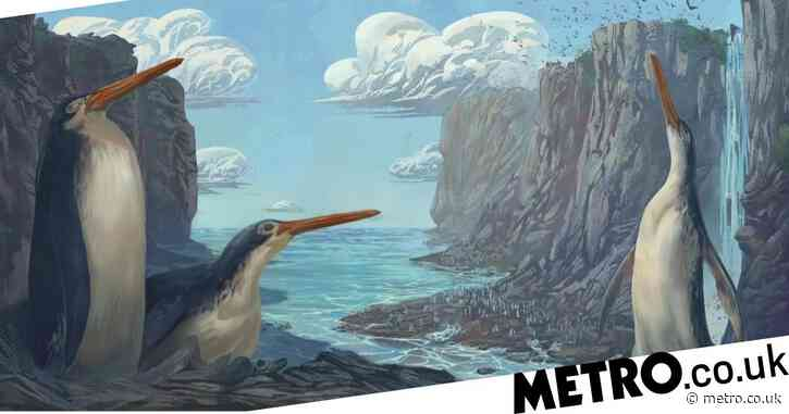 Giant fossil found by children on summer camp is new species of extinct penguin