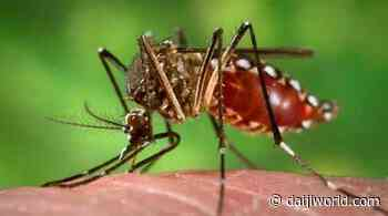Bengaluru: Coronavirus cases slump in many places as dengue takes center stage - Daijiworld.com