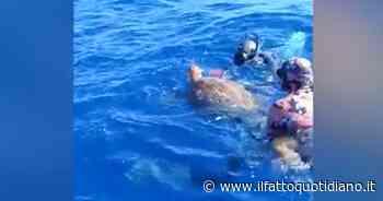 Sardegna, salvate due tartarughe caretta caretta ai Mondiali di pesca in apnea: il video