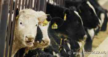Case of mad cow disease found on Somerset farm as investigation launched