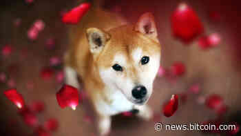 Dogecoin Rival Shiba Inu Spikes in Value While DOGE Prices Flounder, SHIB Jumps 21% in 24 Hours – Market Updates Bitcoin News - Bitcoin News