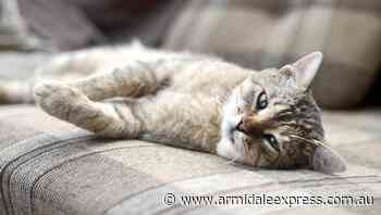 A proactive plan can help find your wayward feline faster - Armidale Express