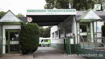 """Tierschutzverein Hamburg: TierheimSüderstraße: """"Die Lage ist katastrophal"""""""