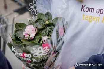 Vrijwilligers verkopen azalea's voor Kom op tegen Kanker - Het Belang van Limburg