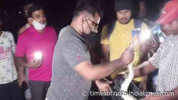 Indian Rock Python rescued from Odisha's Jajpur