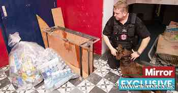 Misery and squalor of £5.2billion fake cig trade and the drug dog gangs want to kill